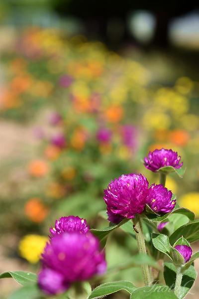 とある花壇の風景