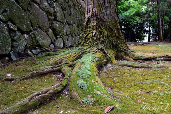 木の根_0076b