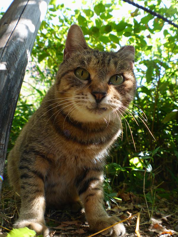 母猫のローアングル