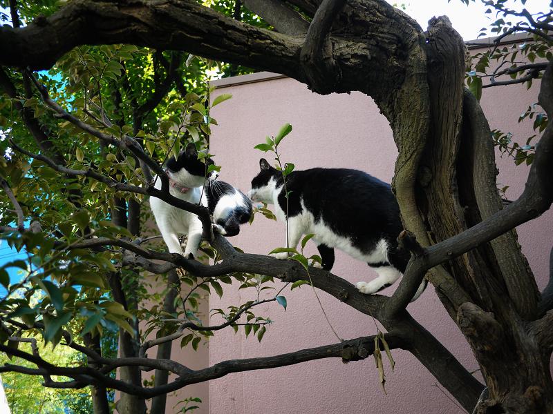 樹上の義理姉妹猫1