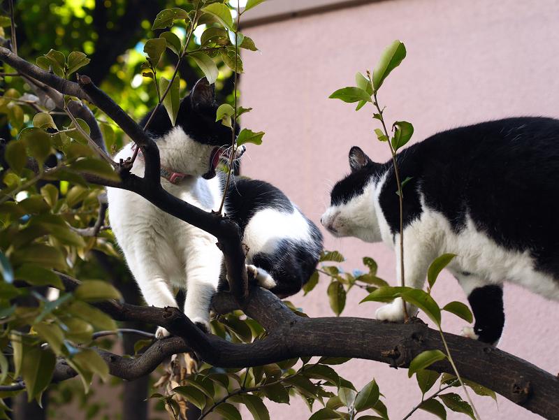樹上の義理姉妹猫2