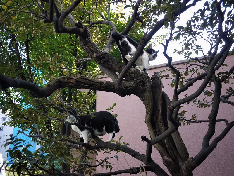 枝上の義理姉妹猫1