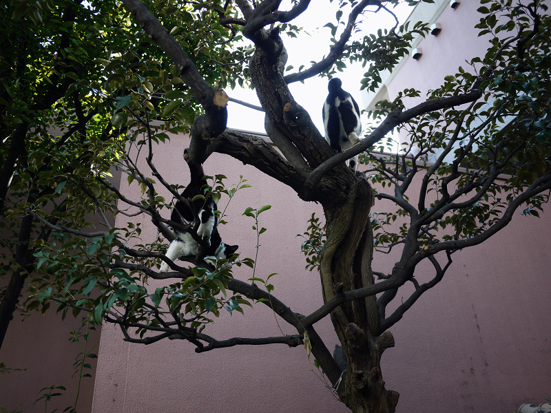枝上の義理姉妹猫2