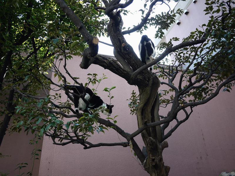 枝上の義理姉妹猫3