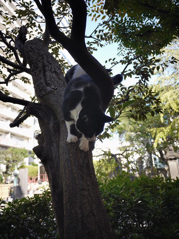 樹木から降りる義理姉猫2