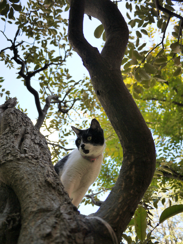 樹木から降りる義理妹猫1