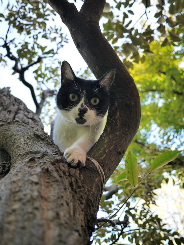 樹木から降りる義理妹猫2