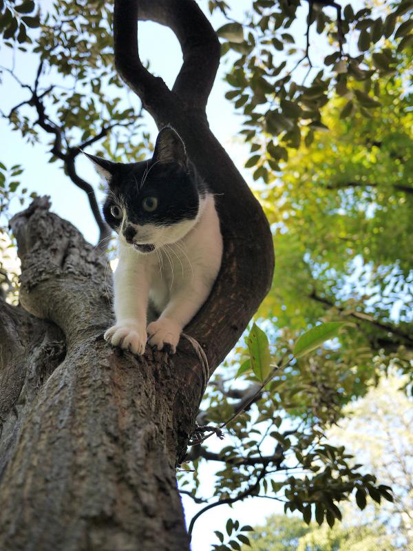 樹木から降りる義理妹猫3