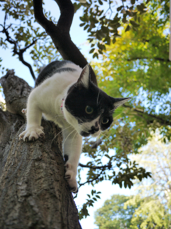 樹木から降りる義理妹猫4