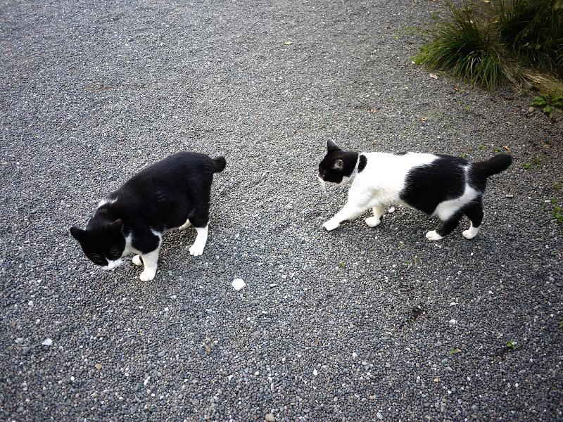 境内で義理姉猫に歩み寄る義理妹猫1