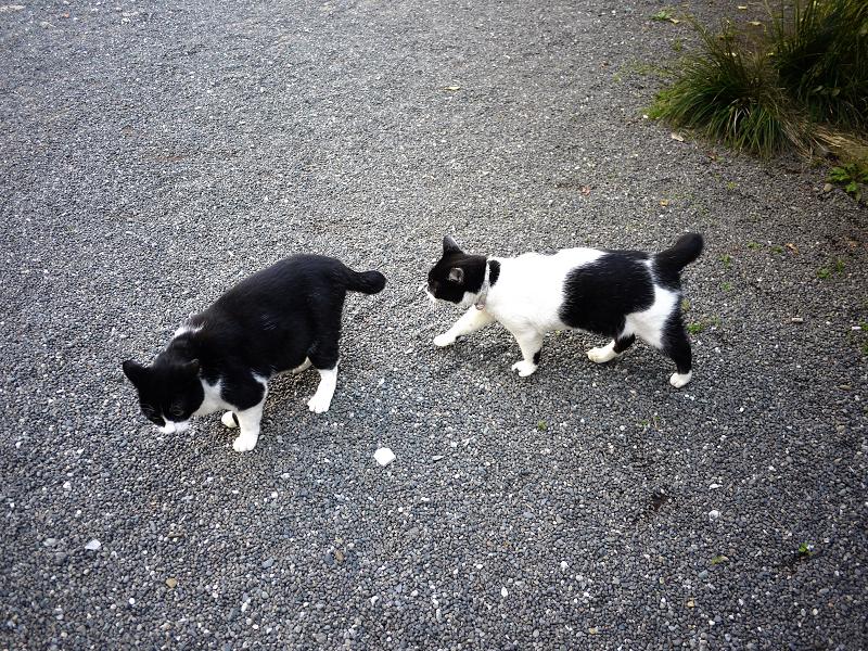 境内で義理姉猫に歩み寄る義理妹猫2