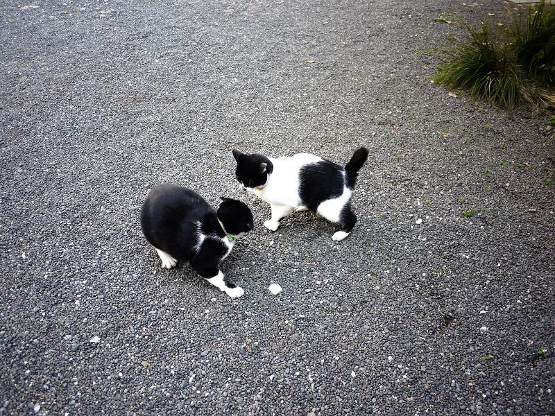 境内で睨み合う義理姉妹猫1