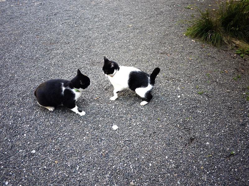 境内で睨み合う義理姉妹猫2