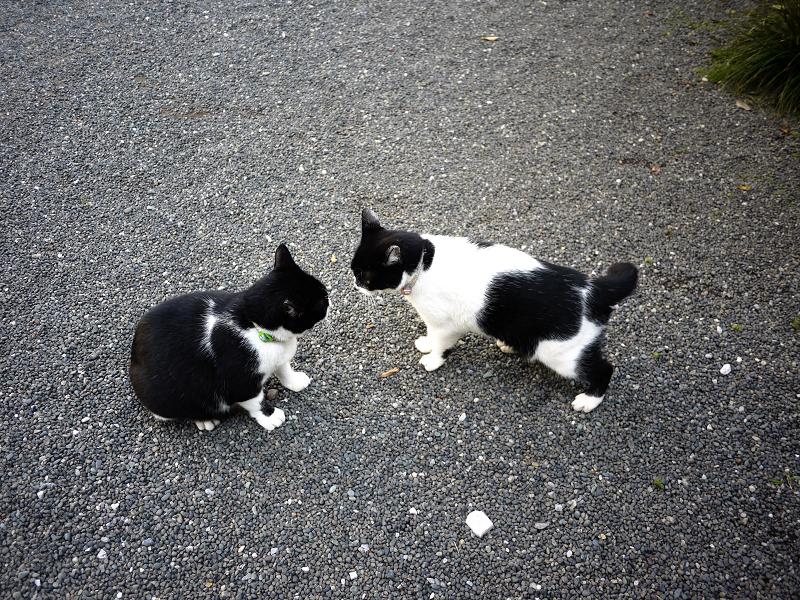 境内で睨み合う義理姉妹猫3