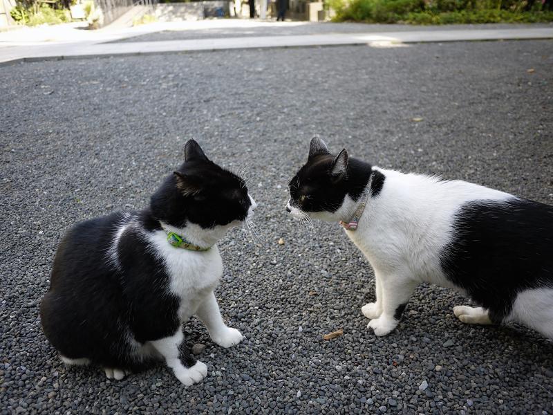 境内で睨み合い固まる義理姉妹猫2