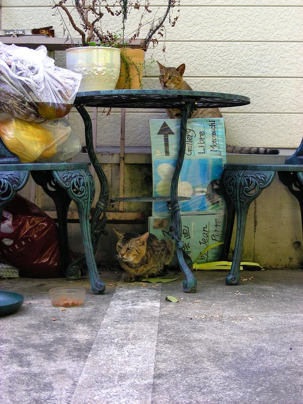 テーブルの上下の猫たち