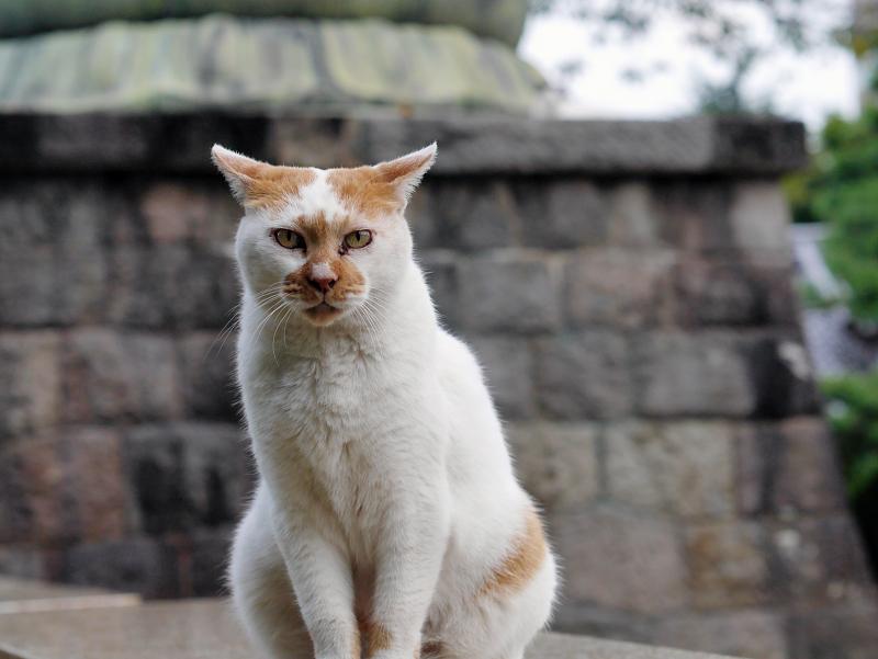 境内に出てきた茶白猫2