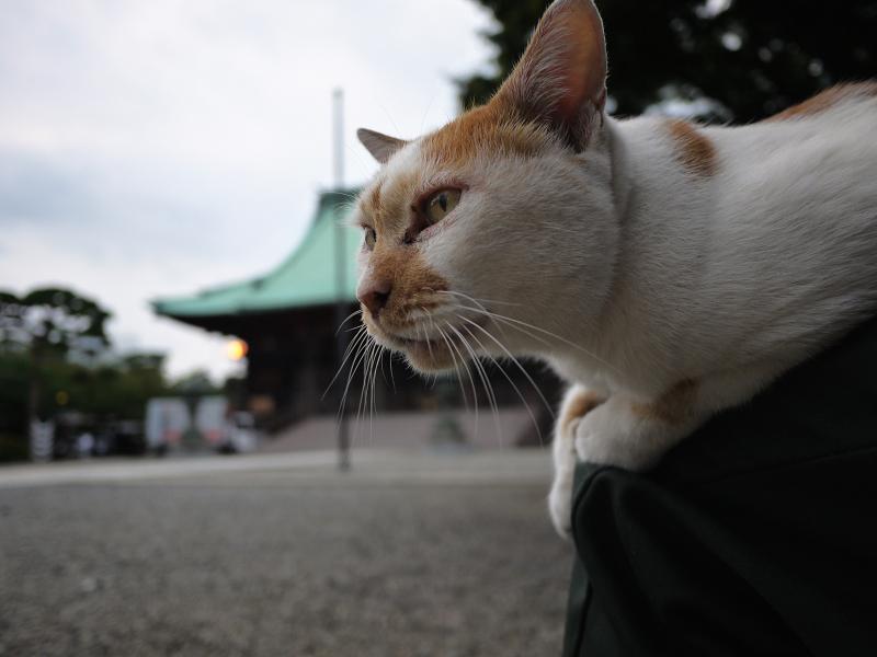 境内で膝に乗った茶トラ猫の視線3