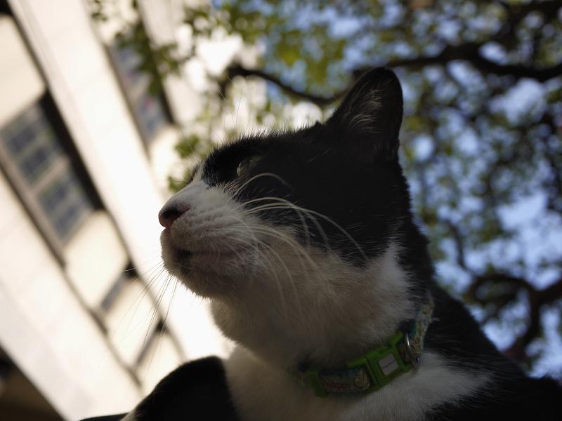 クスノキの下で膝に乗った黒白猫2