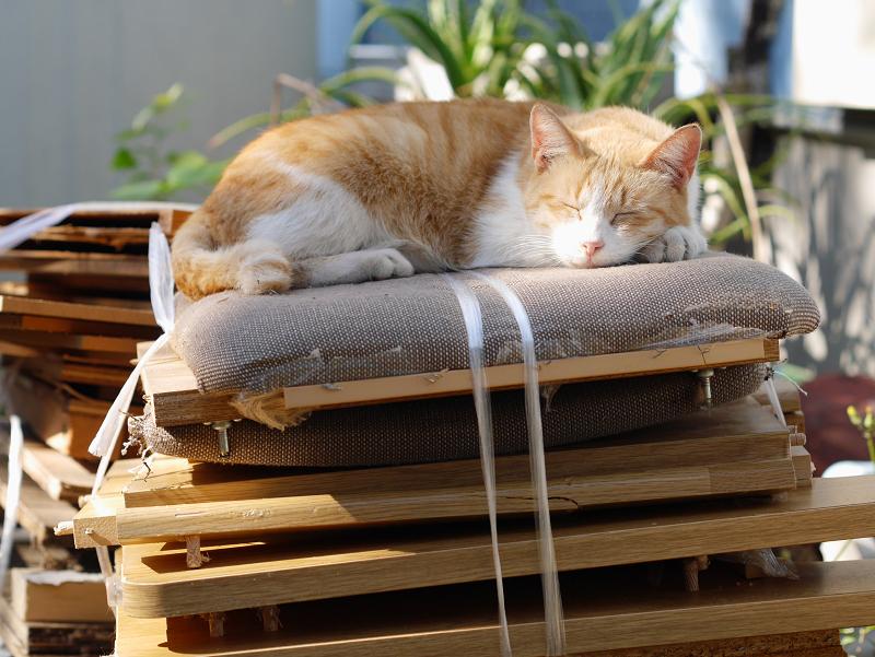 積み上げられた廃材の上の茶白猫1
