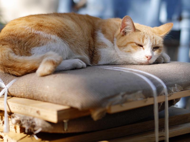 積み上げられた廃材の上の茶白猫2
