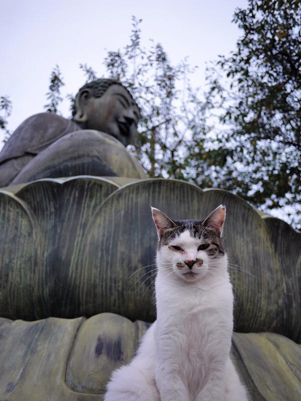 阿弥陀様の蓮華座と白キジ猫1