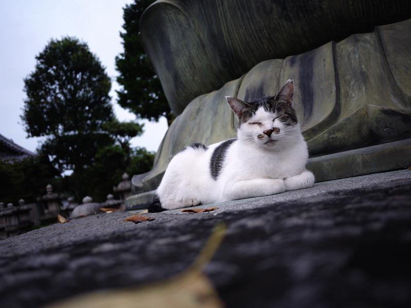 阿弥陀様の蓮華座と白キジ猫3