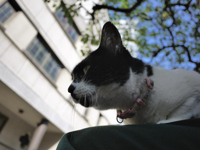 クスノキの下で膝に乗った白黒猫1