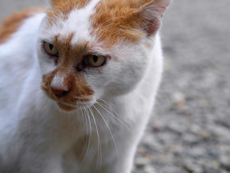 境内の石ベンチと茶白猫3