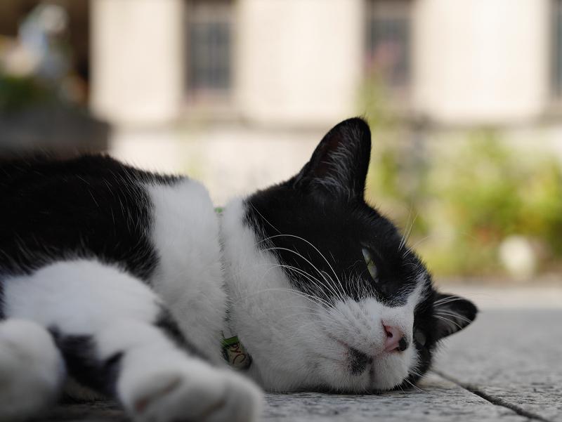 境内で寝そべってる黒白猫1