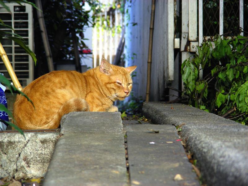 駅前で寛いでる茶トラ猫