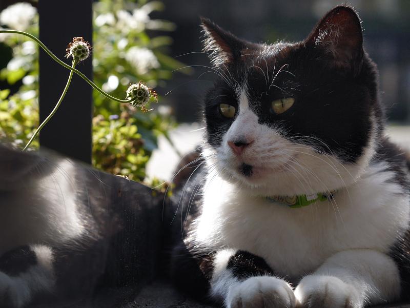 境内のスロープ黒白猫の逆光1