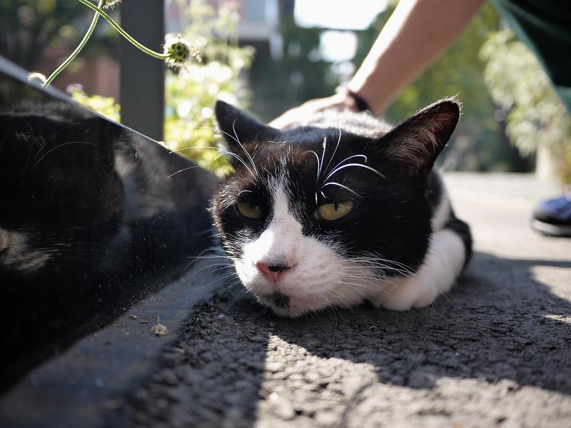 境内のスロープ黒白猫の逆光2