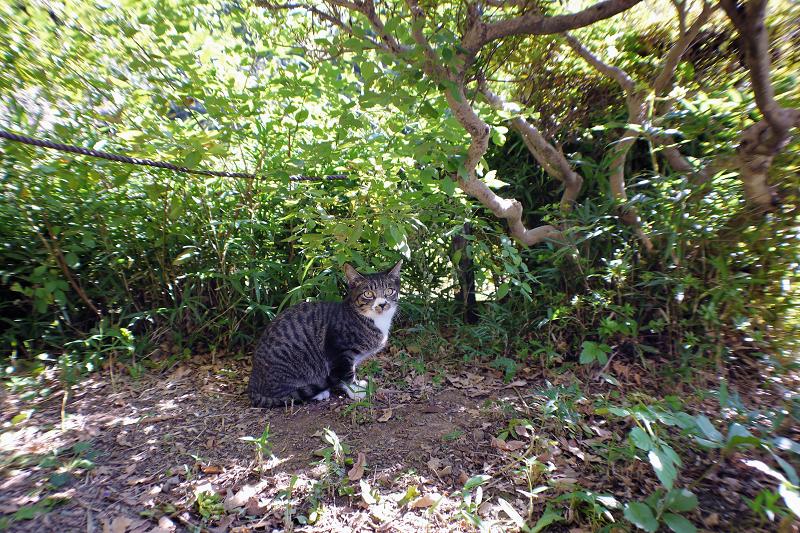 庭園の茂みと仔猫1