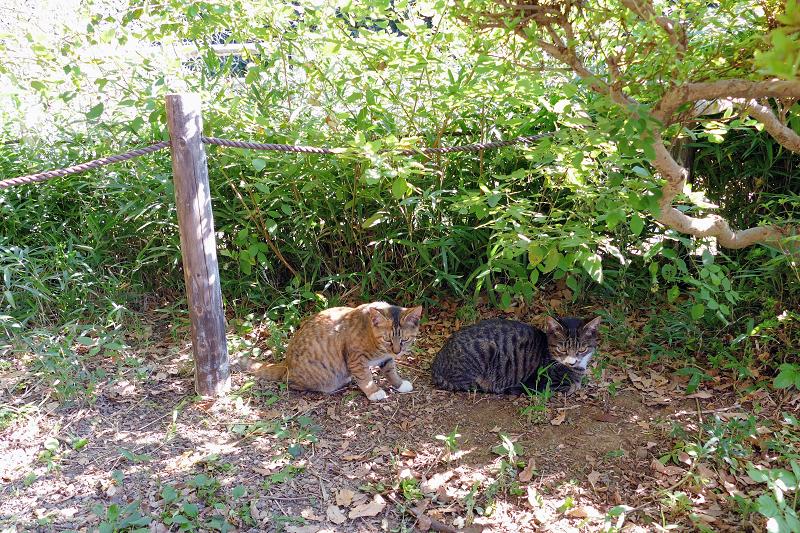 庭園の茂みと仔猫2