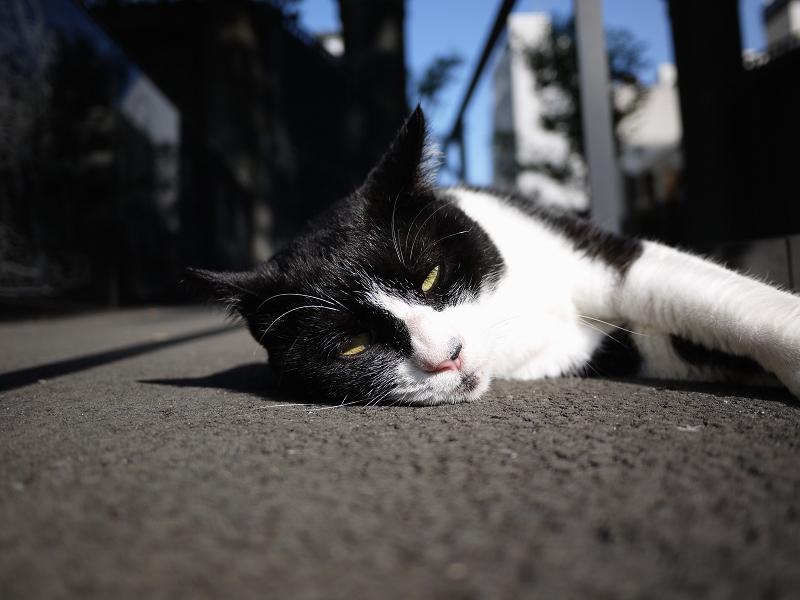 境内のスロープで眠くなってる黒白猫