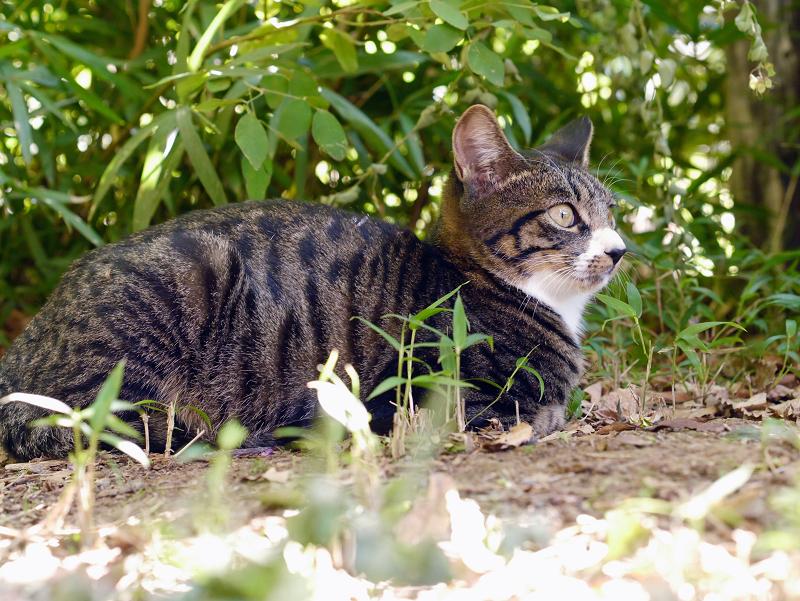 茂みの仔猫の表情1