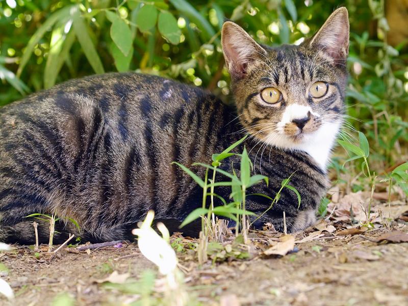 茂みの仔猫の表情2