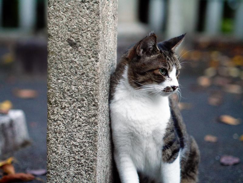 石柱に寄りかかっているキジ白猫