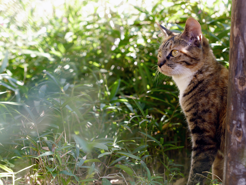 光を浴びってる茂みの仔猫1