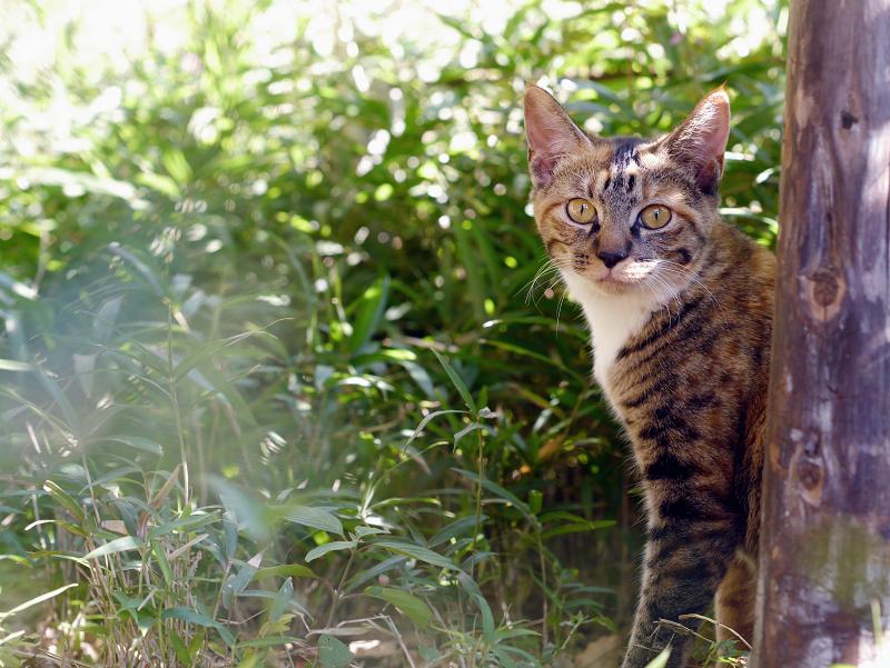 光を浴びってる茂みの仔猫2