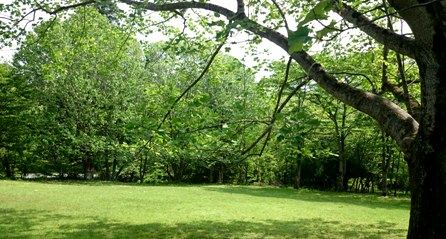 2016 5月 くつきの森