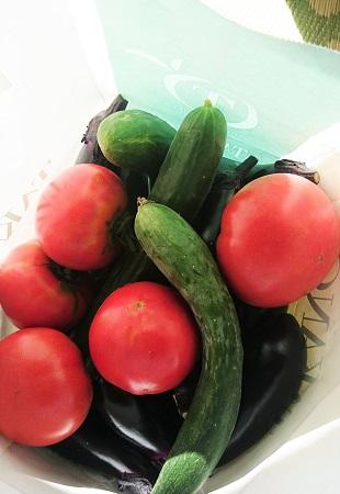 トマト2016 年7月