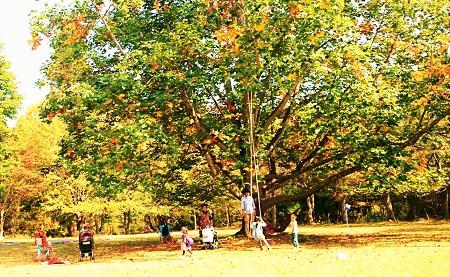 2015 朽木の森 収穫祭 ブランコ
