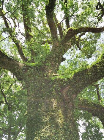 木見上げる