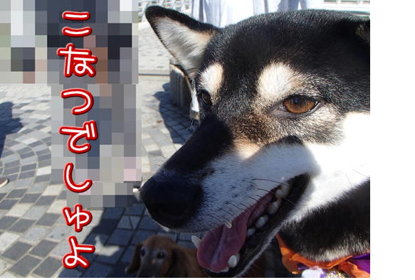 1_17_201610301853488c7.jpg