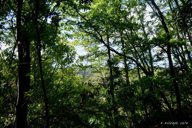 散歩・雑木林