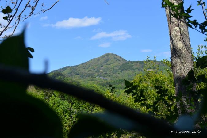 散歩・枝越しの集落
