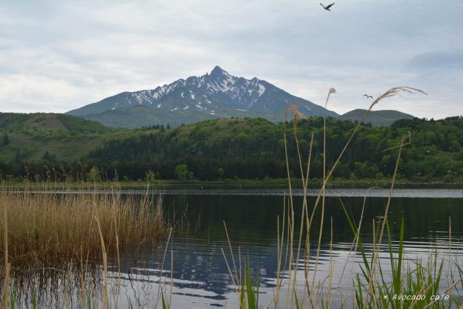 オタトマリ湖から利尻富士1