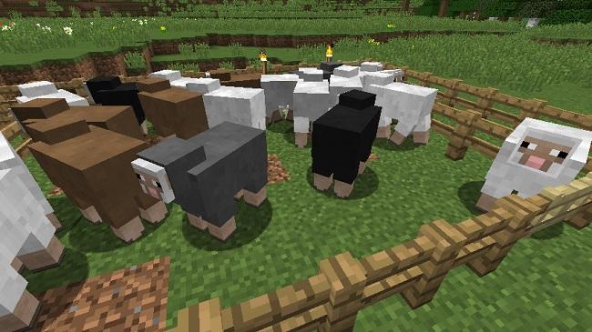 羊さん、650.365